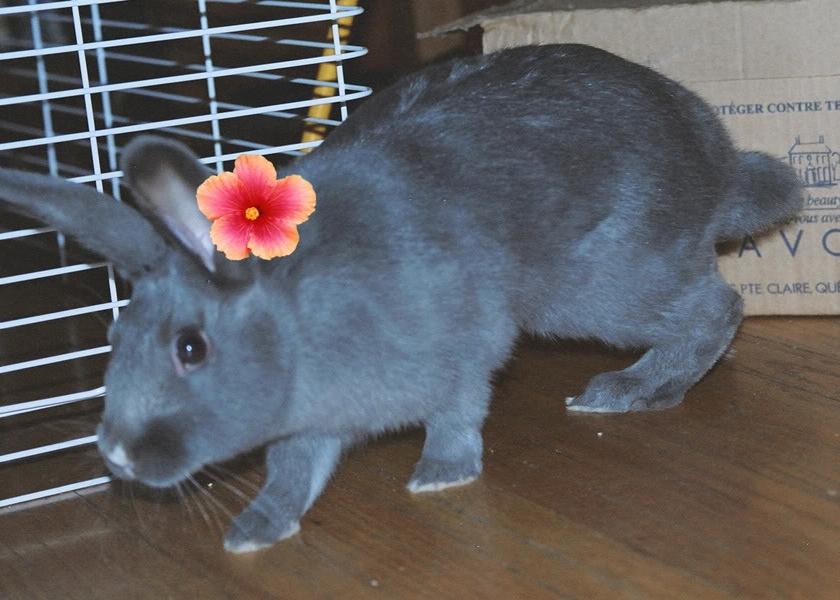 19) Gordon the rabbit