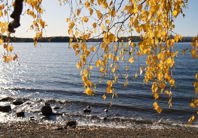 Gull er ikke alt som glimrer ved sjøen i oktober