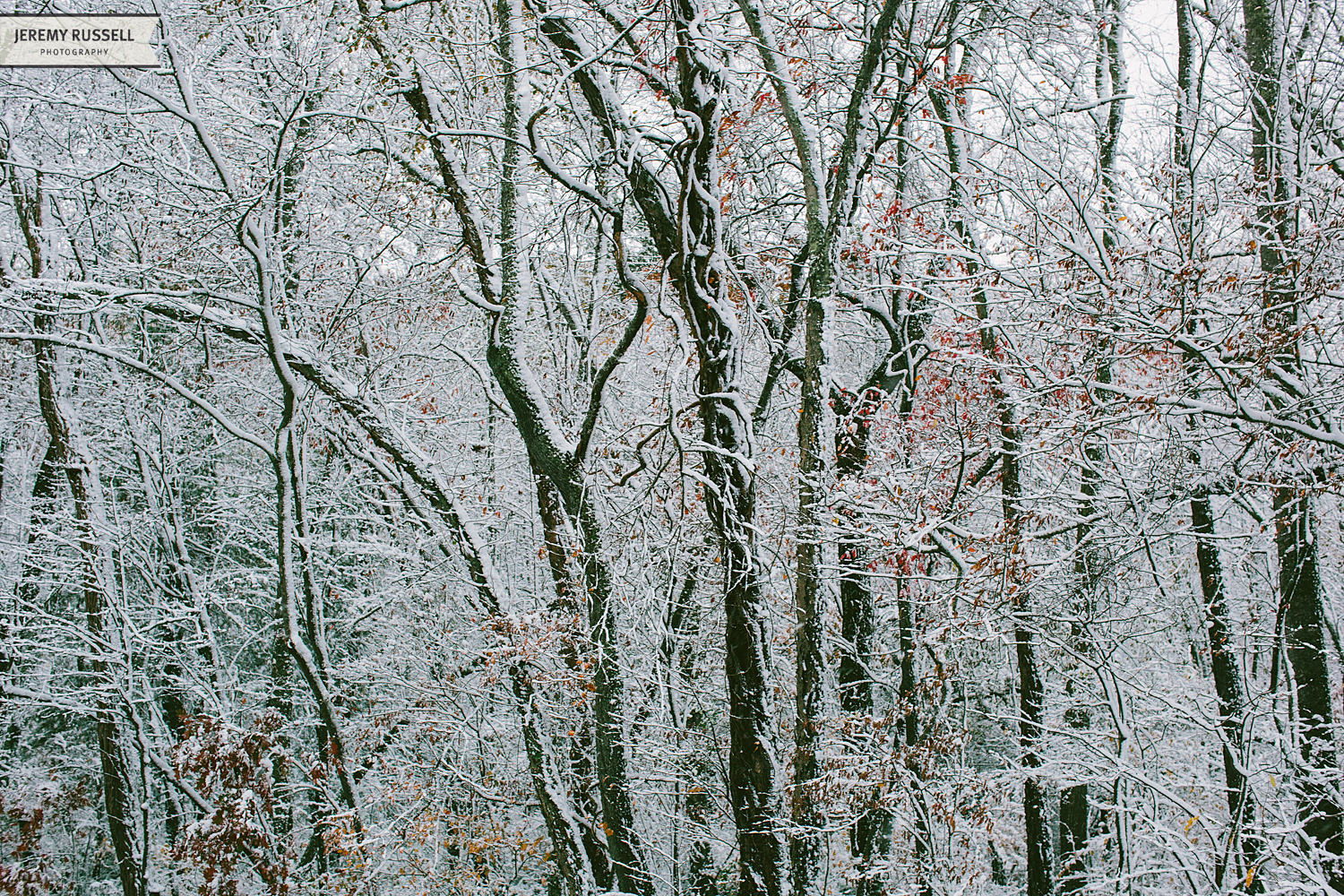 Jeremy-Russell-14-Asheville-Fall-Snow-1.jpg