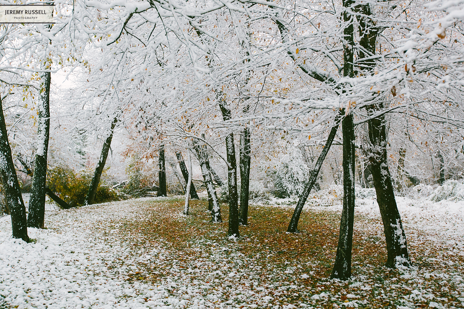 Jeremy-Russell-14-Asheville-Fall-Snow-5.jpg