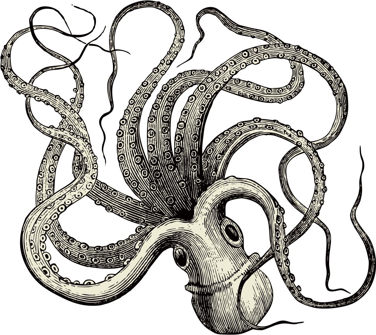 octopus vulgaris   via Shutterstock