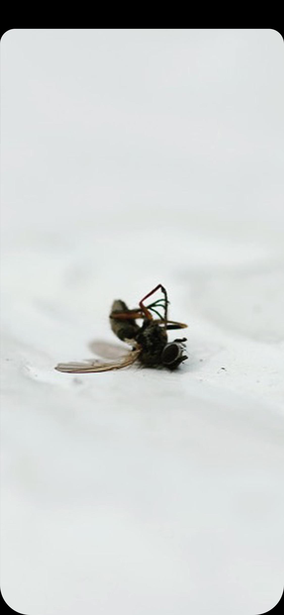 geirwerner-Deadfly.jpg