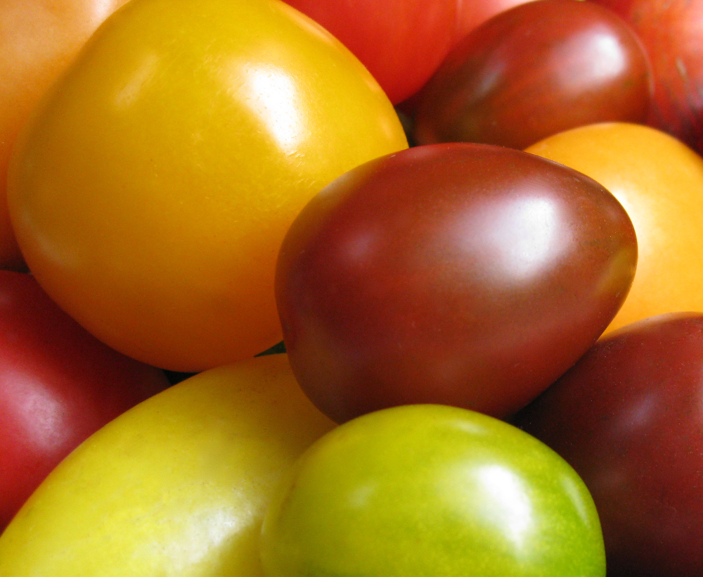 Heritage Tomatoes from Chick-a-Biddy Acres