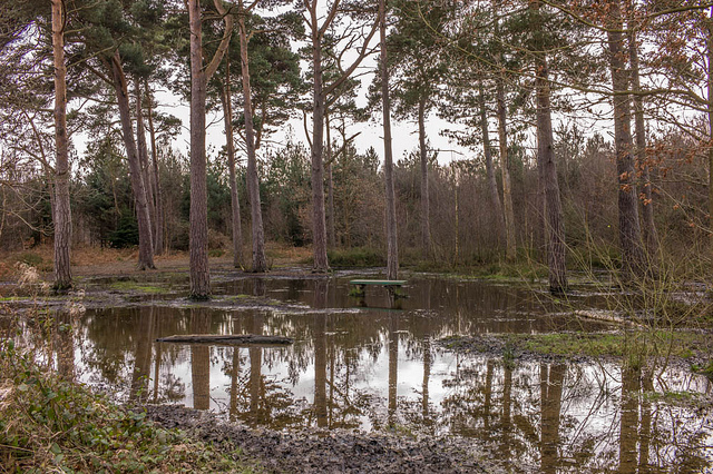 Clowes Wood, near Canterbury