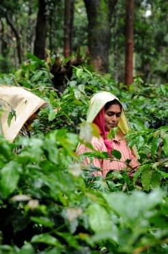 coffee-pruning.jpg