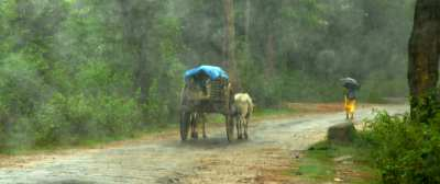 Rains arrive in Malnad