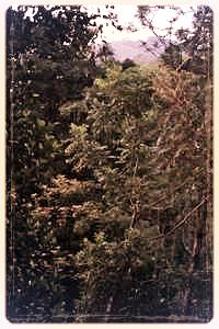 plantation-nearby.jpg