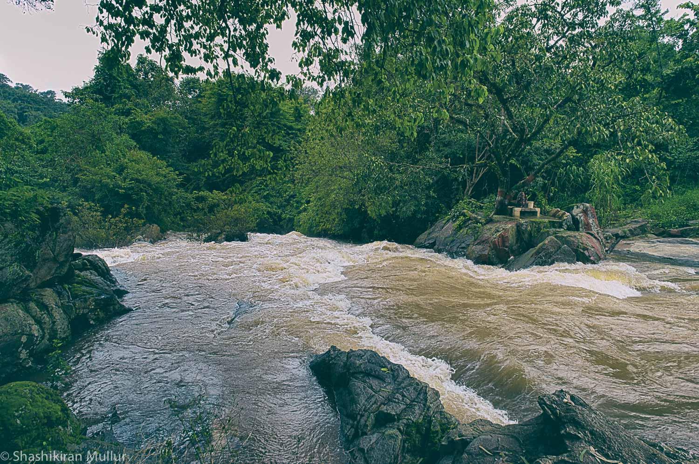 The speedy stream through a fellow-planter's estate