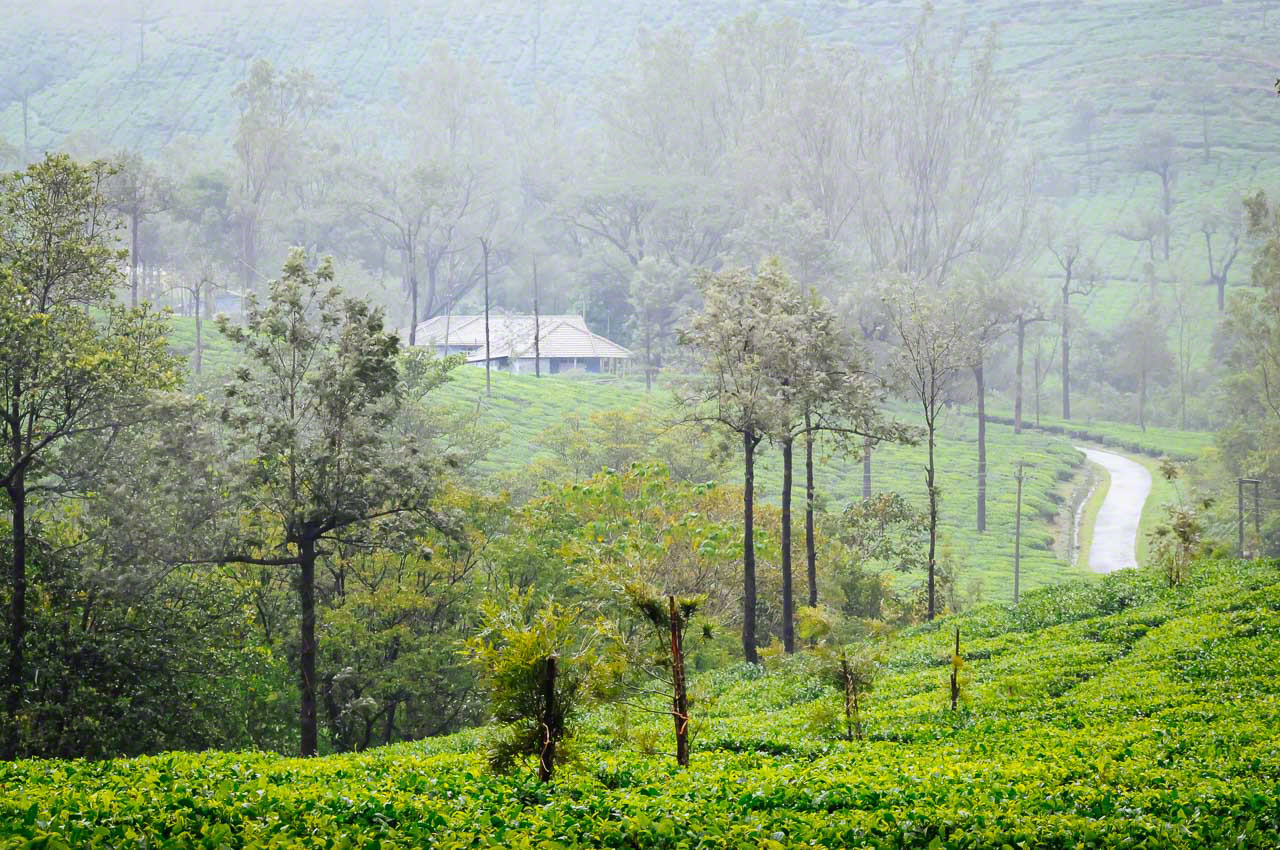 Kadumane Tea Estate