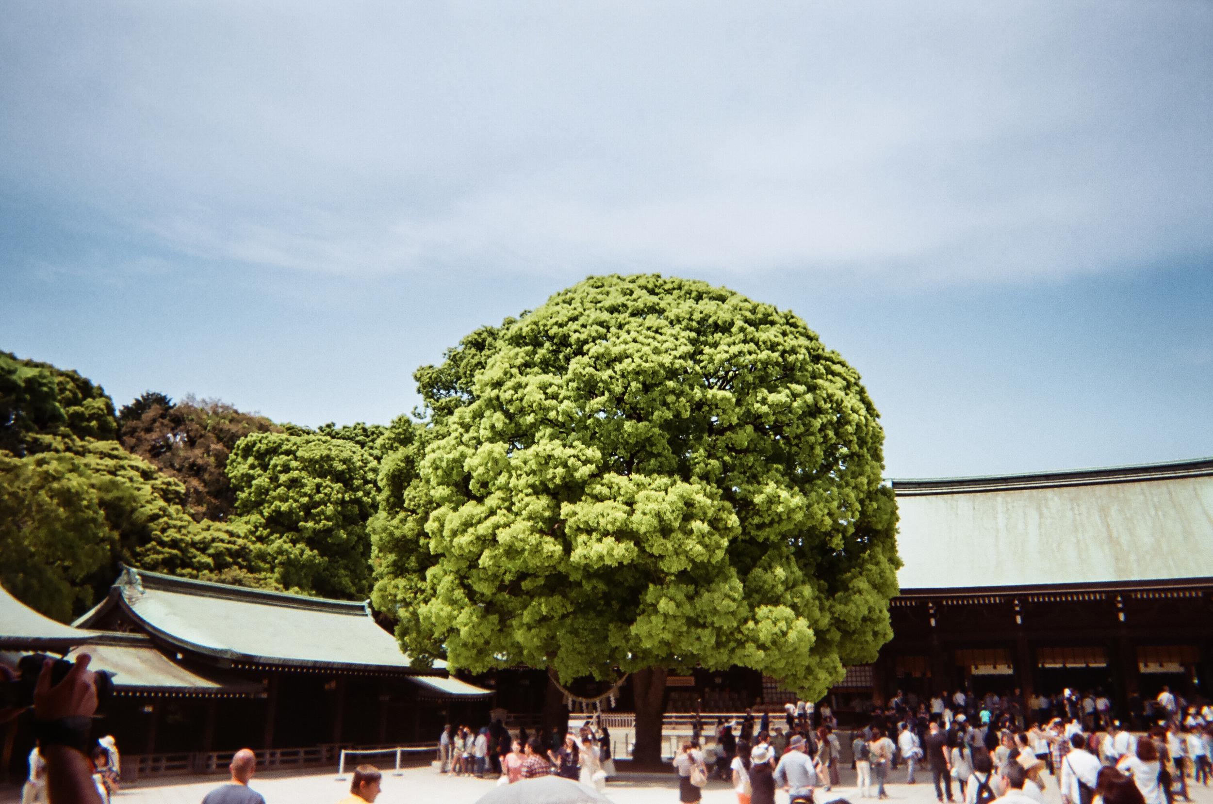 Meiji Jingu Temple in Yoyogi Park