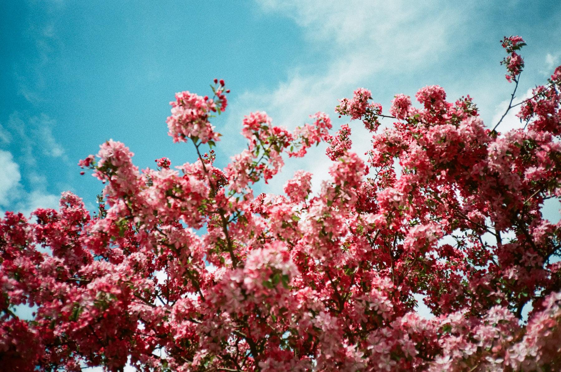 Blooming flowers and blue skies mean summer has arrived in Calgary