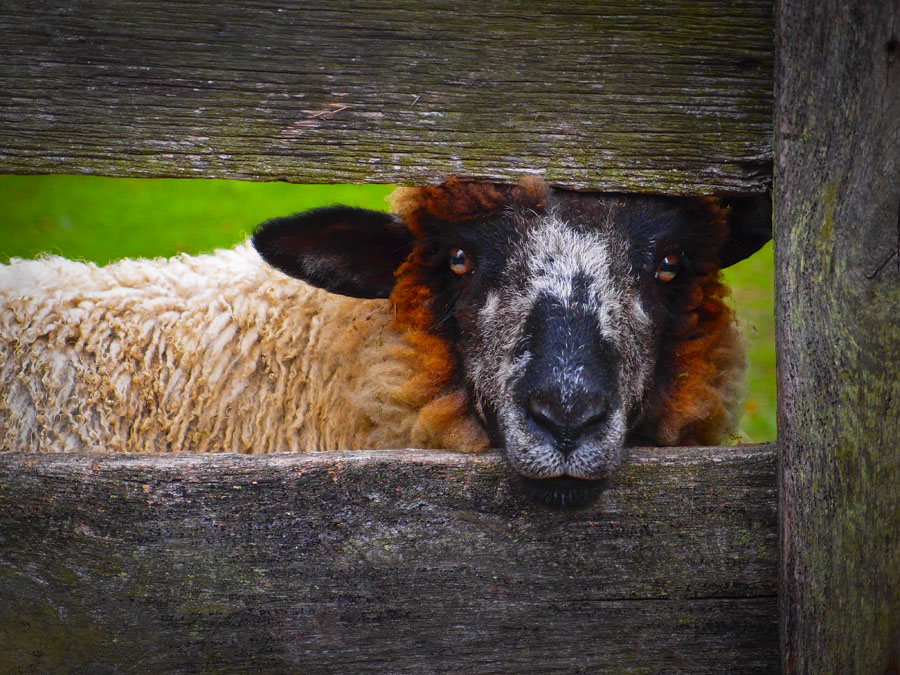 Lookin' at Ewe