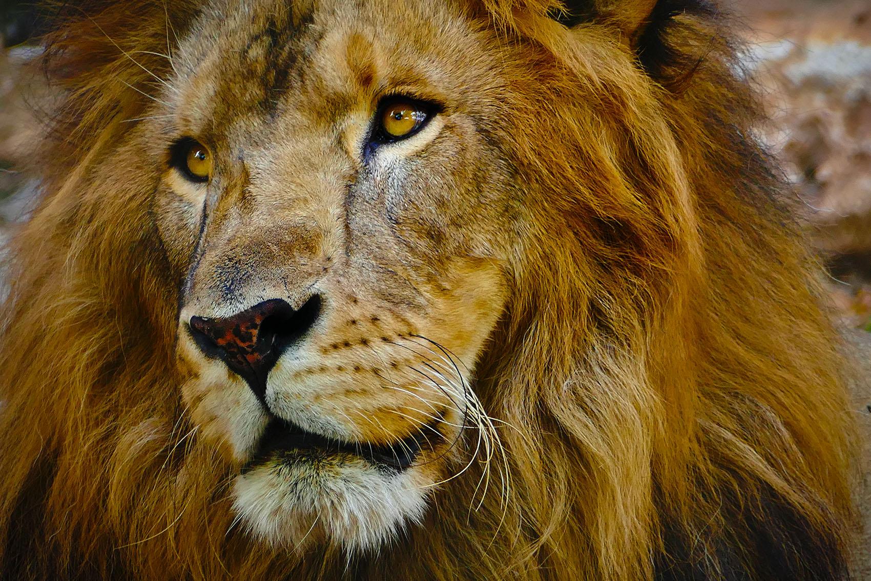 El Rey 2