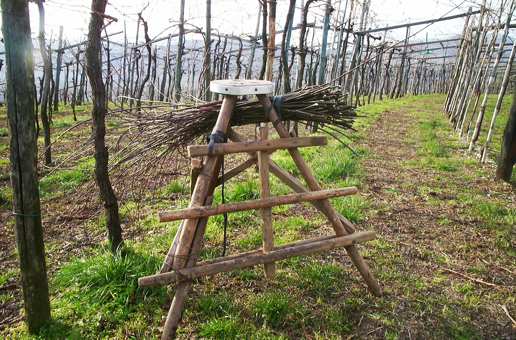Traditional viticulture in Valpolicella Photo courtesy of Claudio Oliboni