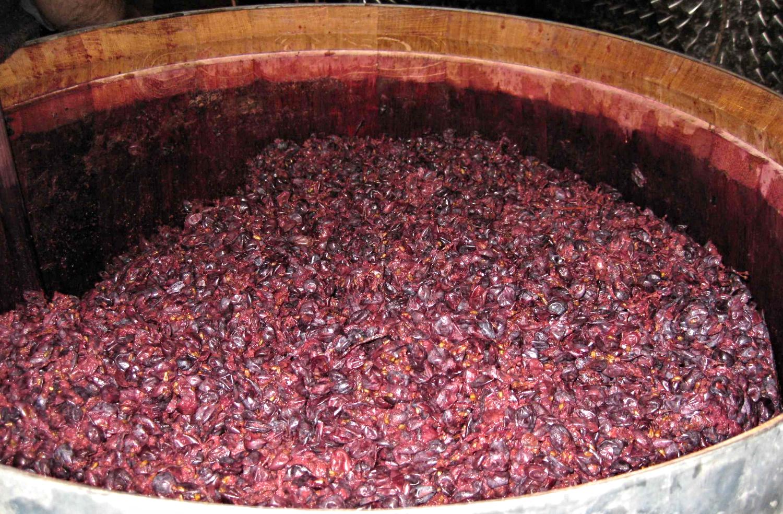 Marc of Amarone in a open barrel