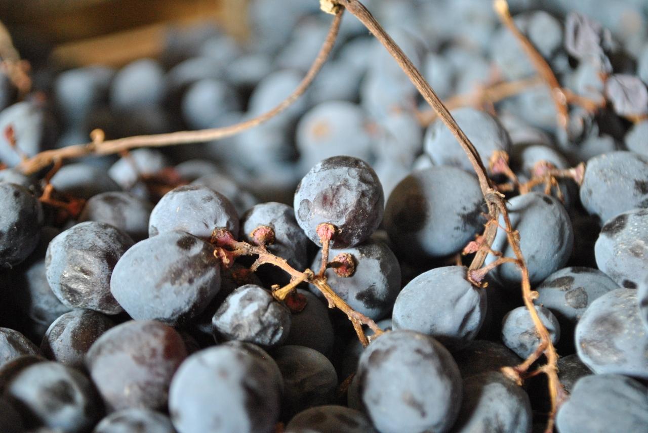 Valpolicella grapes during the drying process - Photo courtesy of Claudio Oliboni