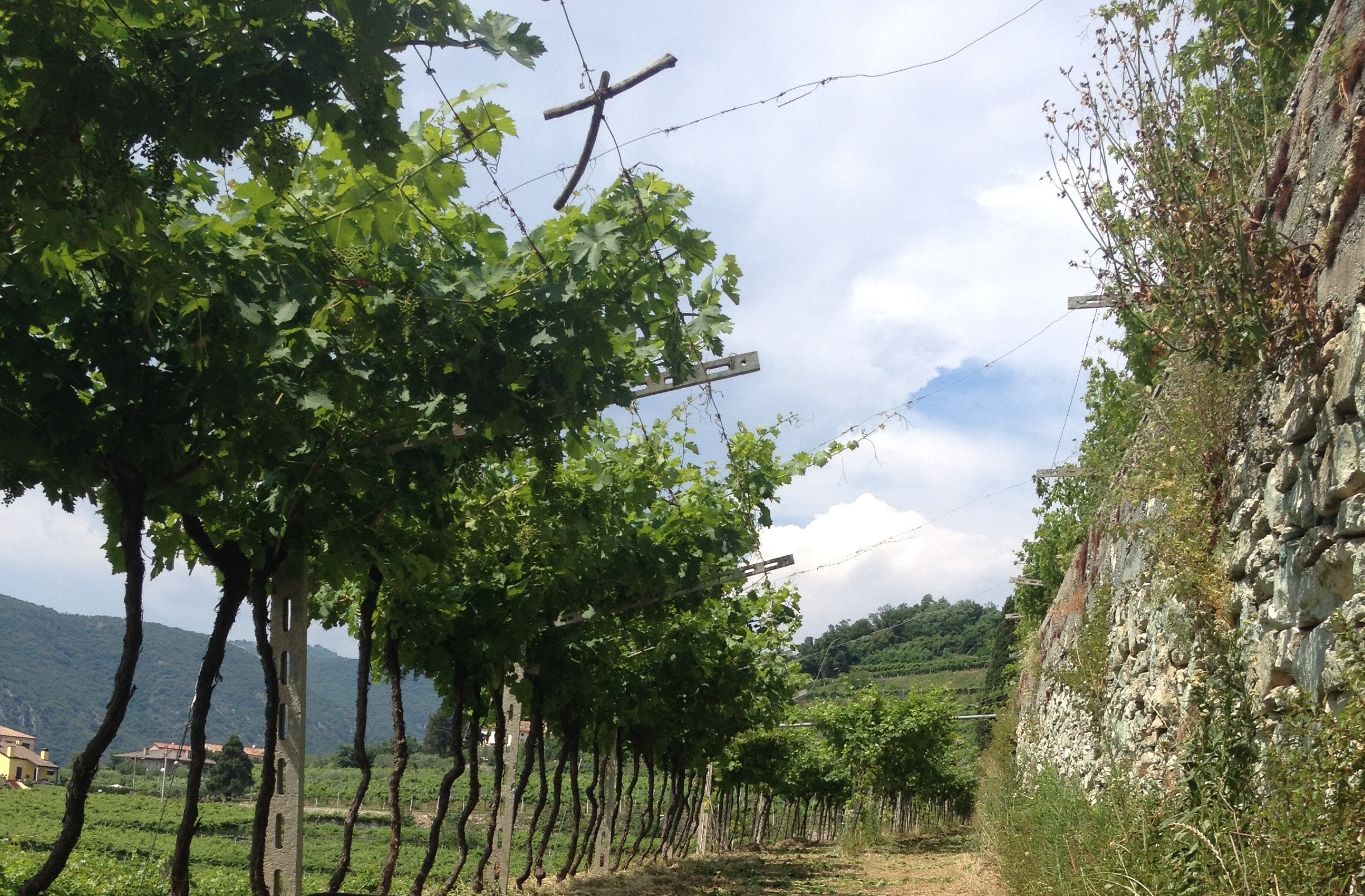 Chevalier VINEYARD-AND-SUSTAINABLE-USE-OF-CHEMICAL-FREE.jpg