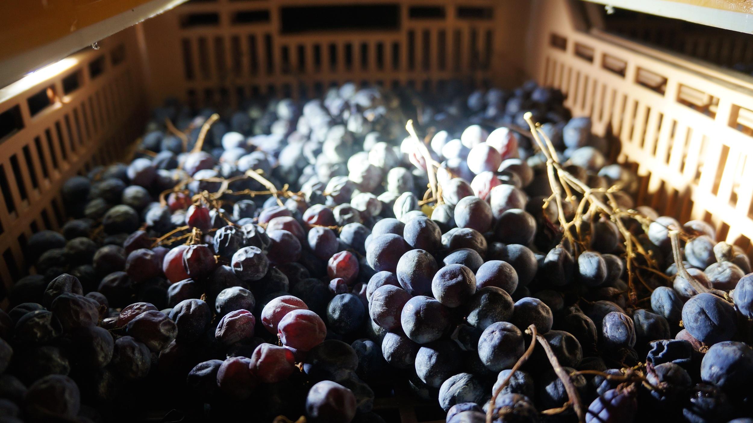 Valpolicella grapes