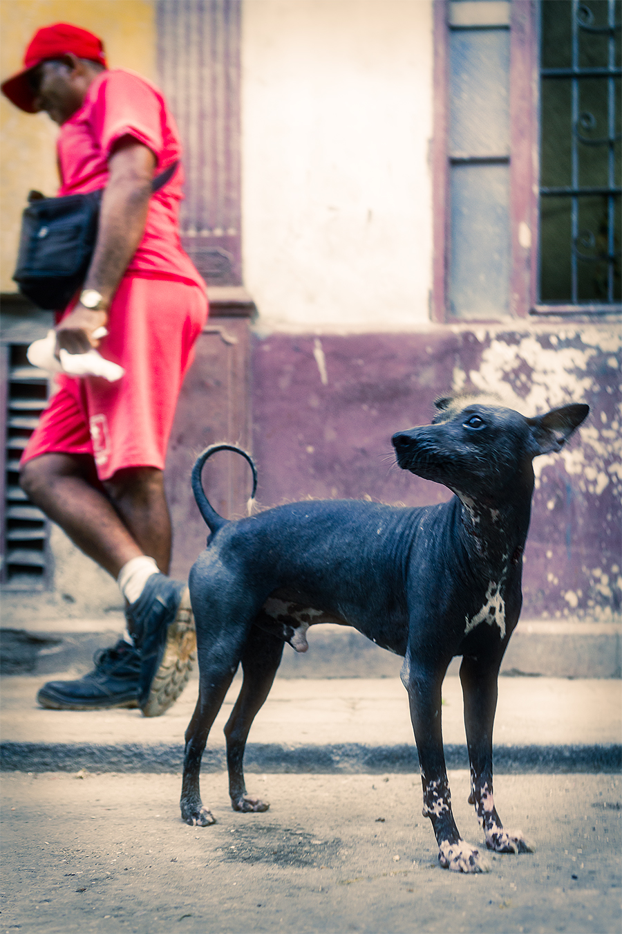 Dog in a street inHavana, Cuba
