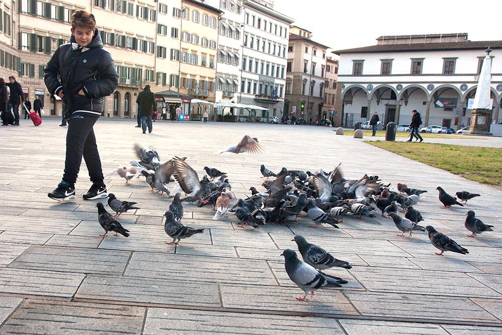 Pigeon Chasing, Florence