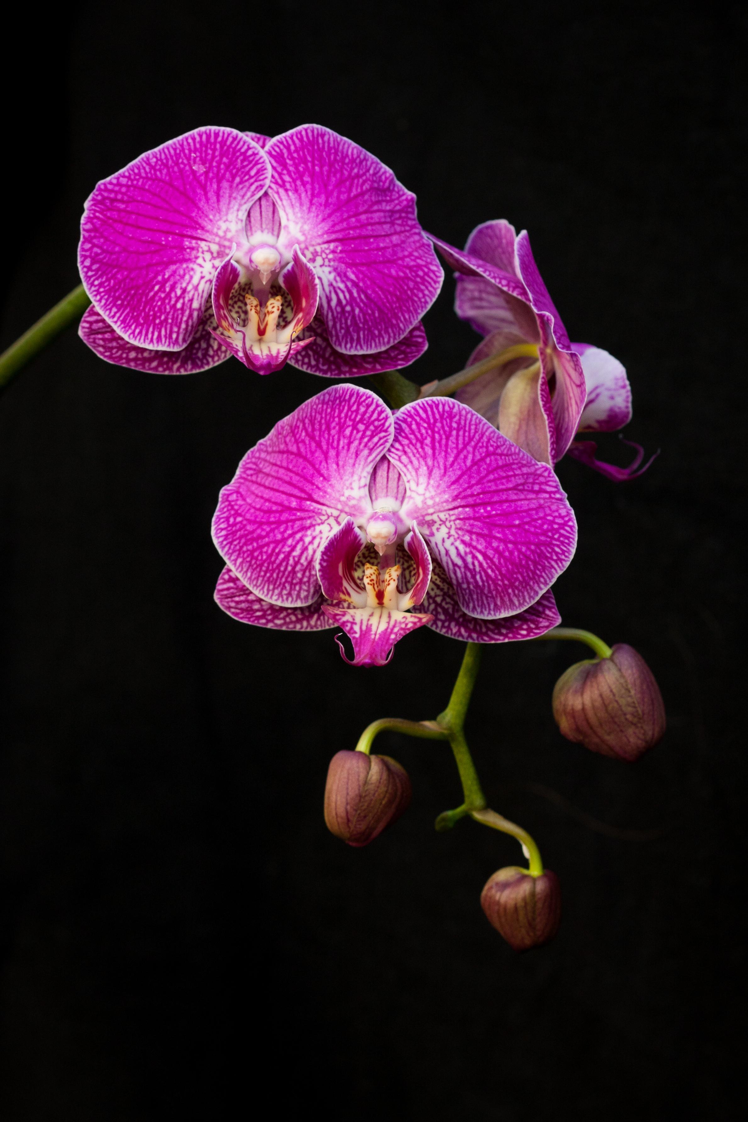 orchids_on_black.jpg