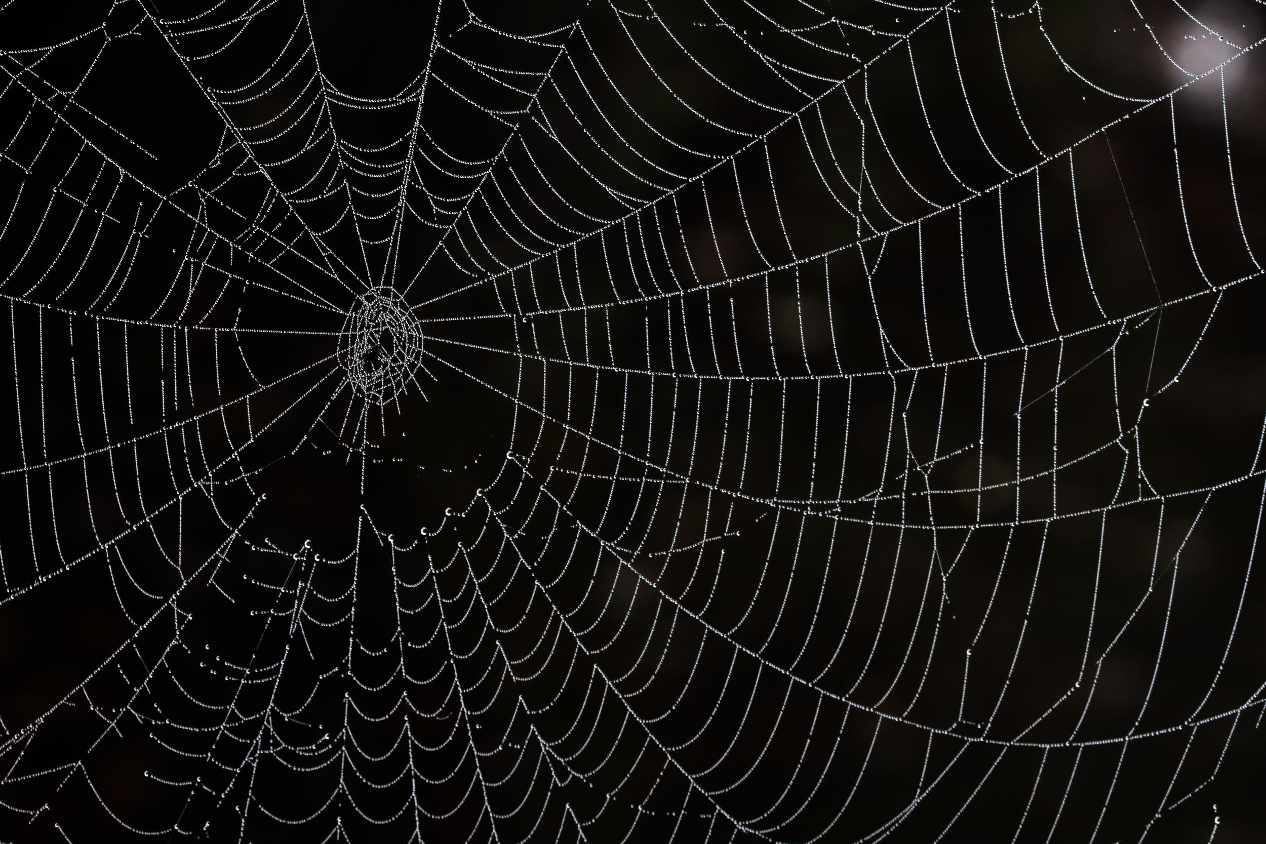 spiderweb_with_dew.jpg