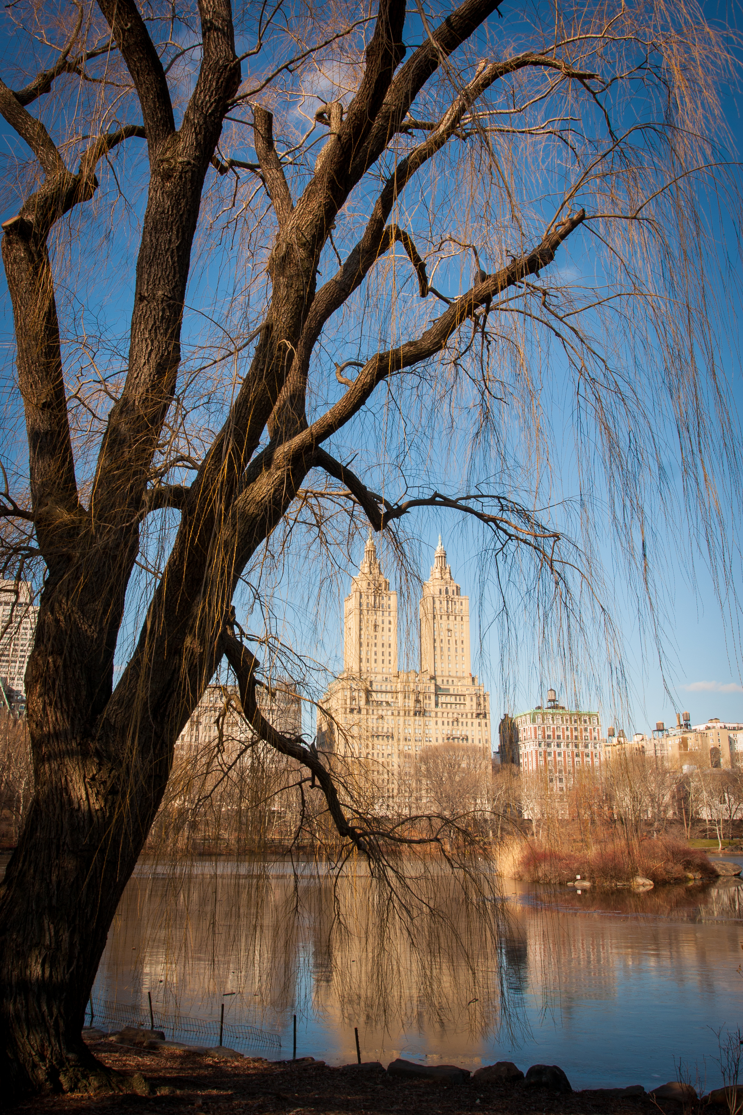 A bare tree frames skyscrapers along the frozen lake in Central Park.