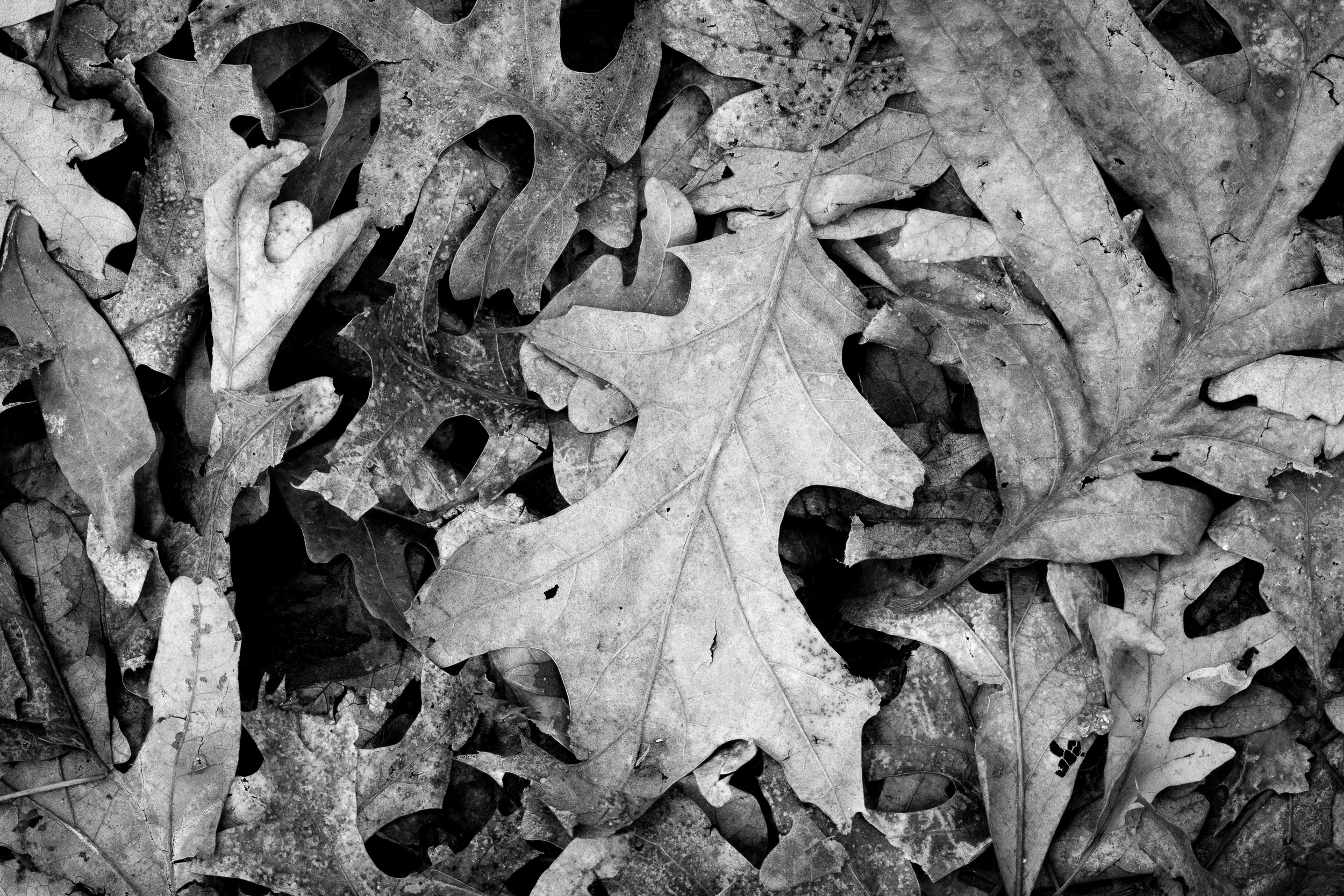 Converted to B&W in Lightroom 4.