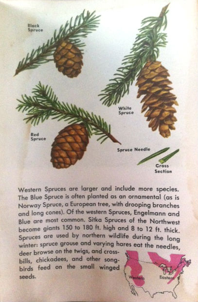 spruce_book_page.jpg