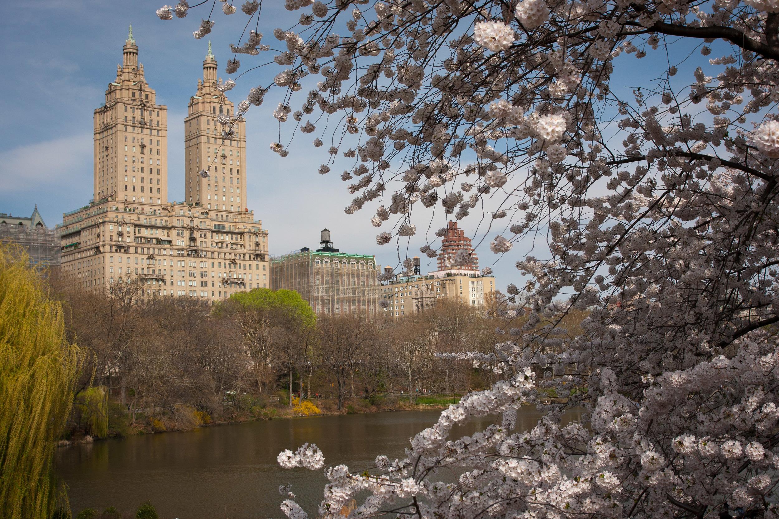 Central_Park_Spring.jpg