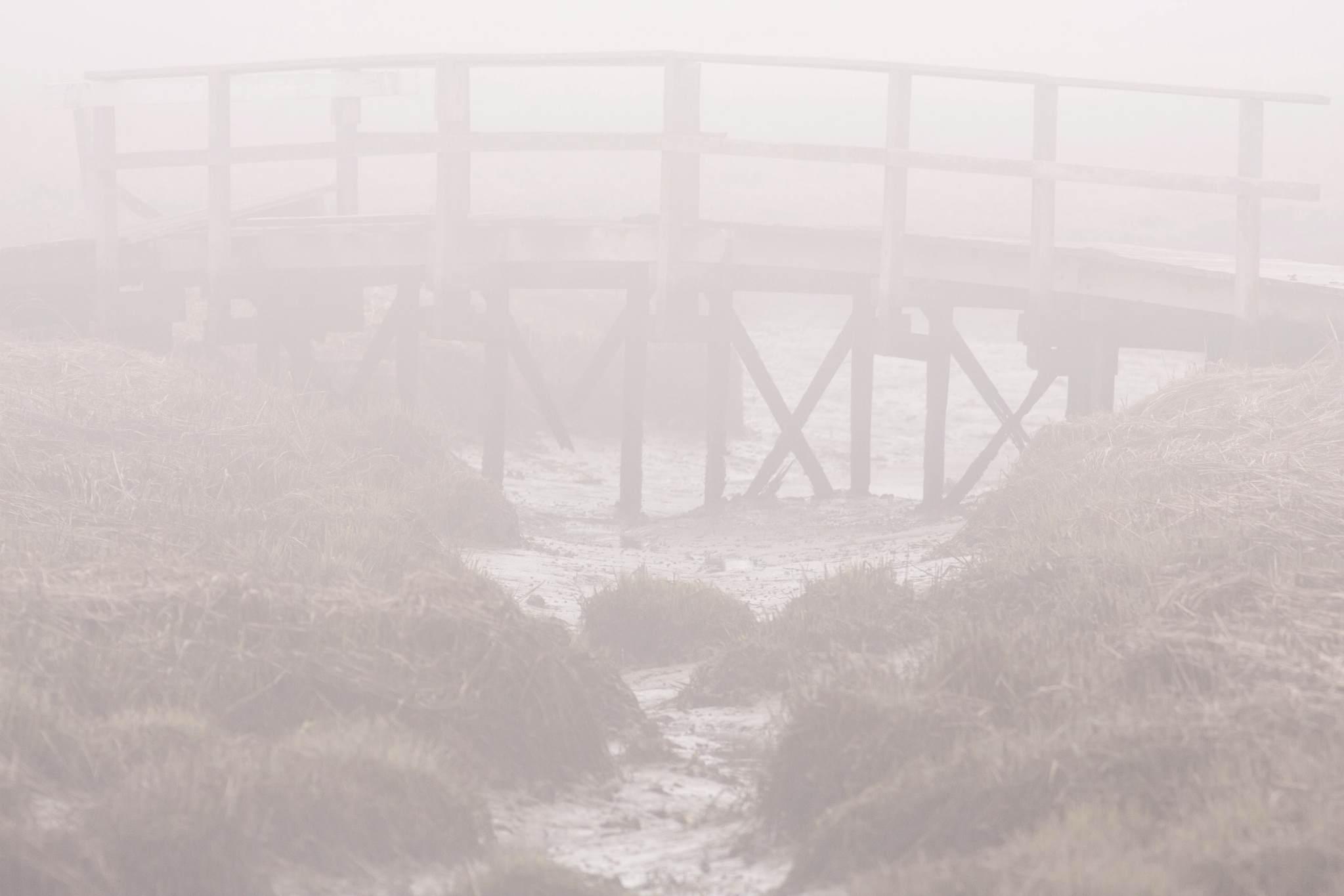 foggy_foot_bridge_oceanside.jpg