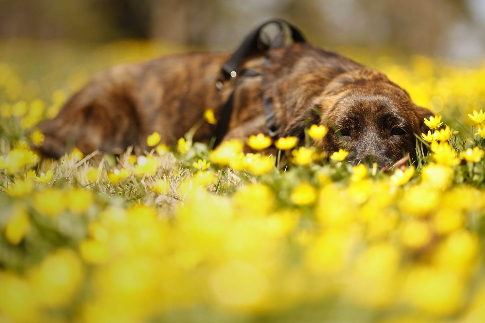 Opal lounging in the wildflowers.