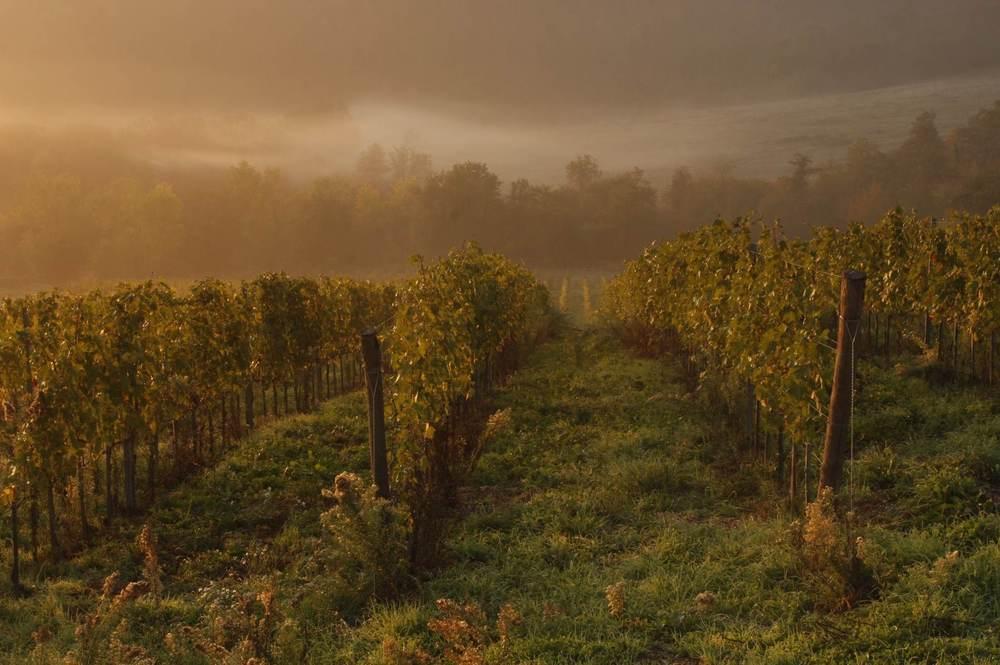 vineyards_chris_corradino.jpg