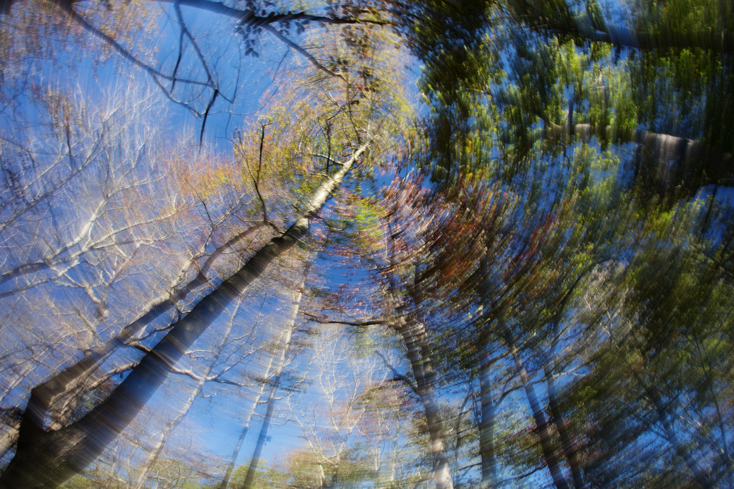 Spinning under the autumn leaves
