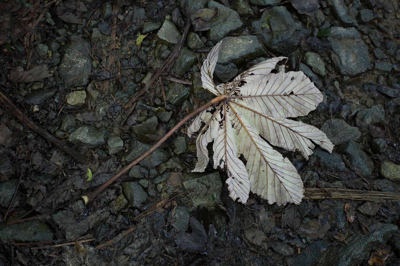 Lone leaf on muddy rocks