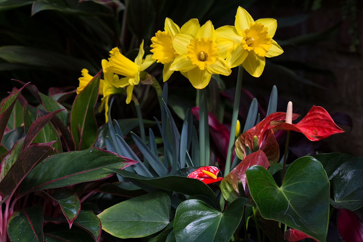 daffodils_march_2014.jpg