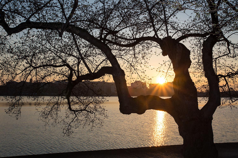 sunrise-dc-2014.jpg