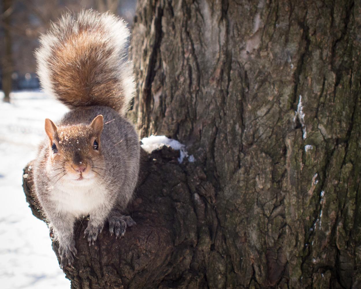 squirrel_winter_nyc