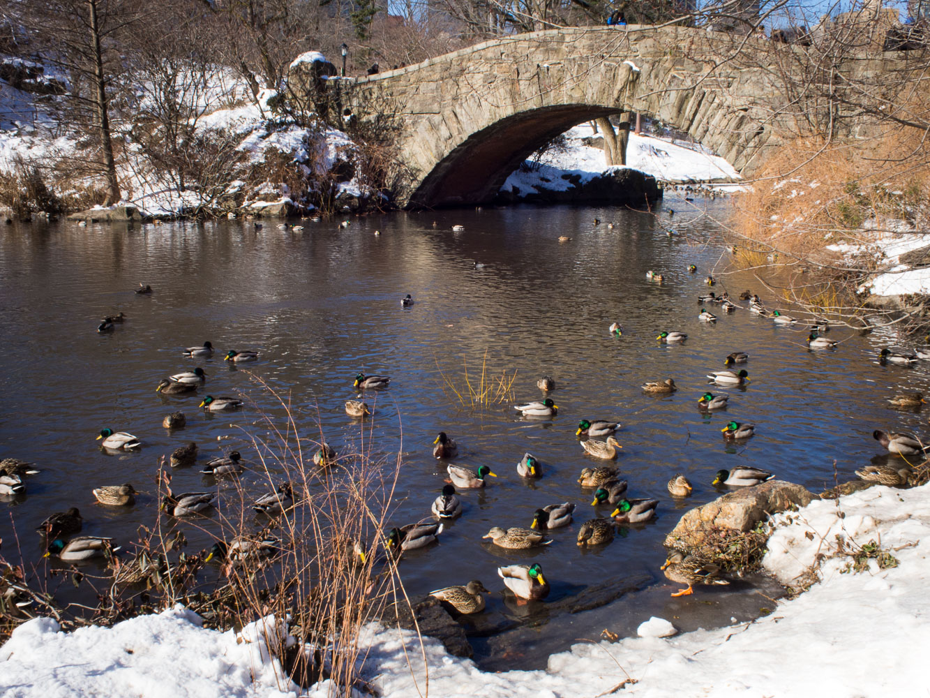 gapstow_bridge_ducks_winter