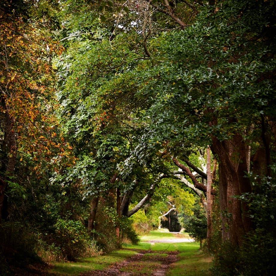 Autumn Path.jpg
