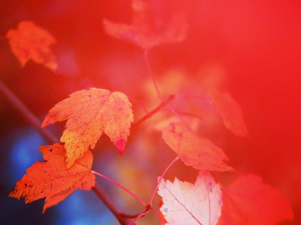 Good-color.jpg