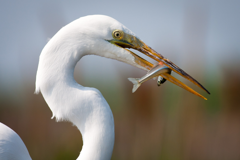Chris_Corradino_Photography_Travel_Wildlife-18.jpg
