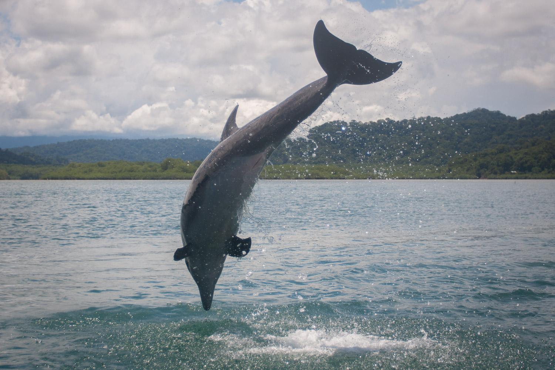 Bottlenose-Dolphin-Costa-Rica.jpg