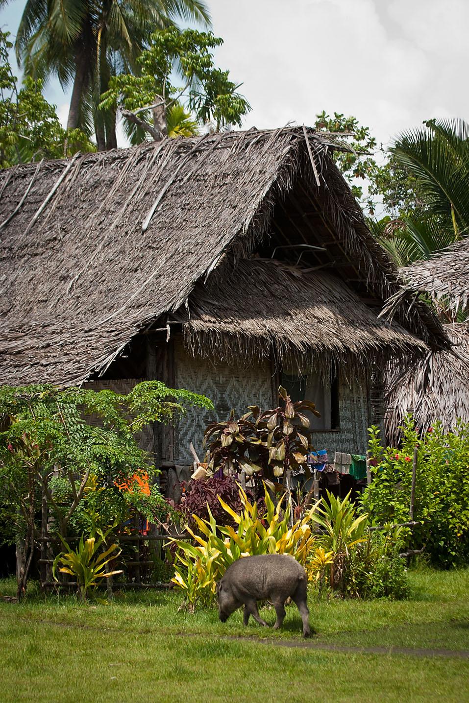 Day #10 New Guinea Adventure