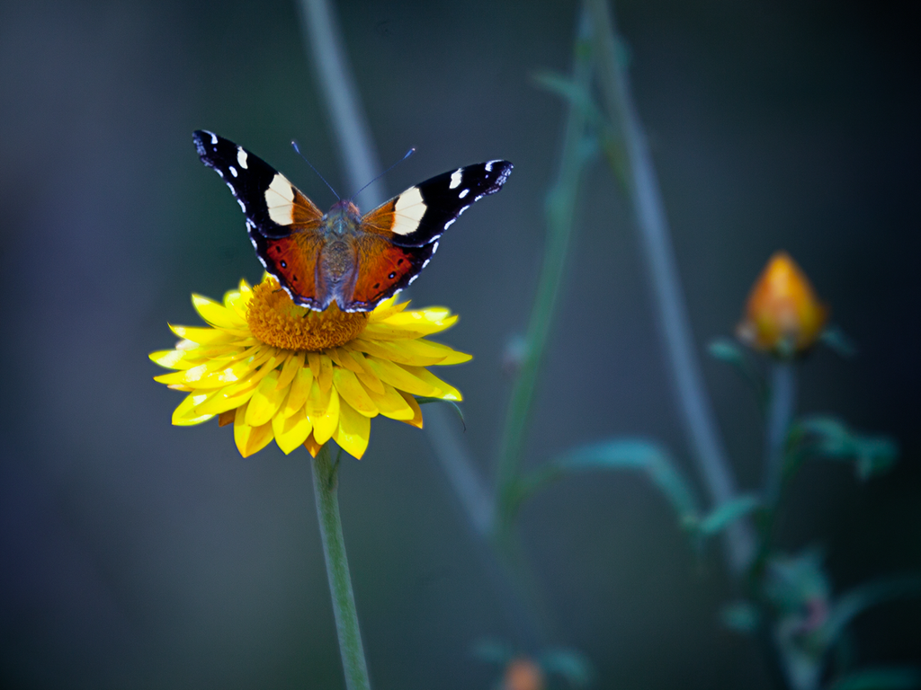 Butterfly and flowers everywhere