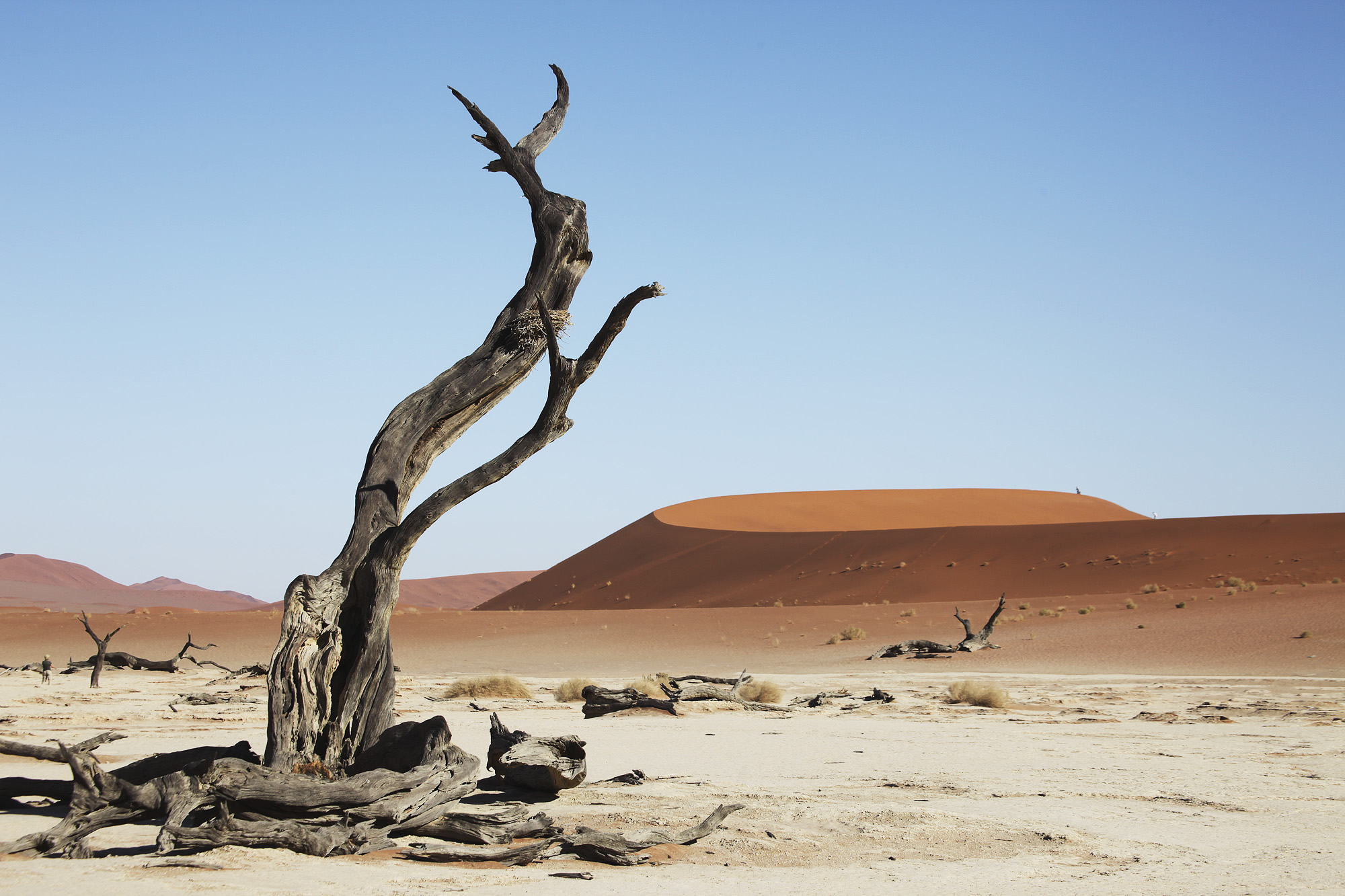 At the base of Big Daddy standing in Dead Vlei