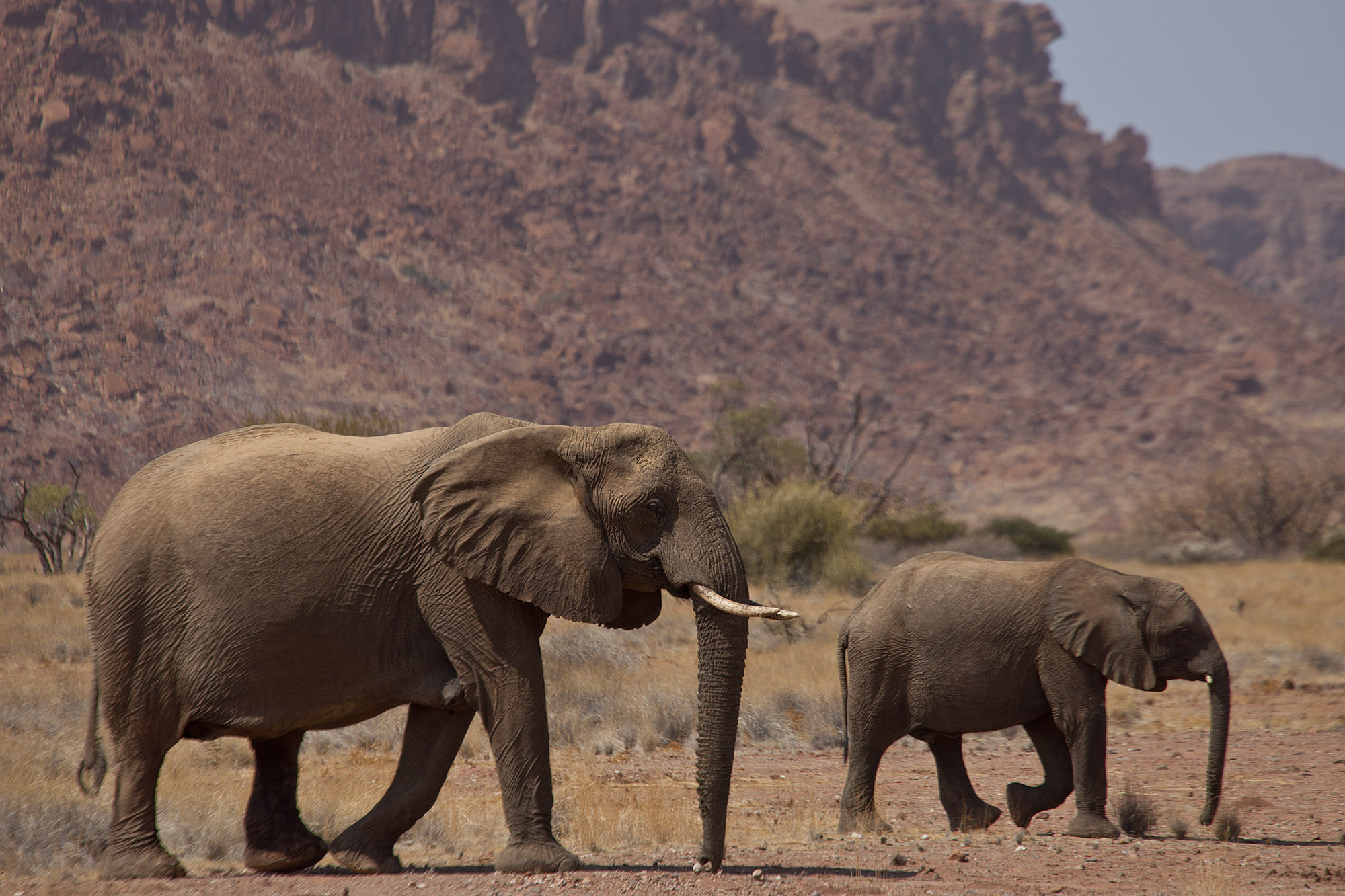Elephants against the mountain backdrop