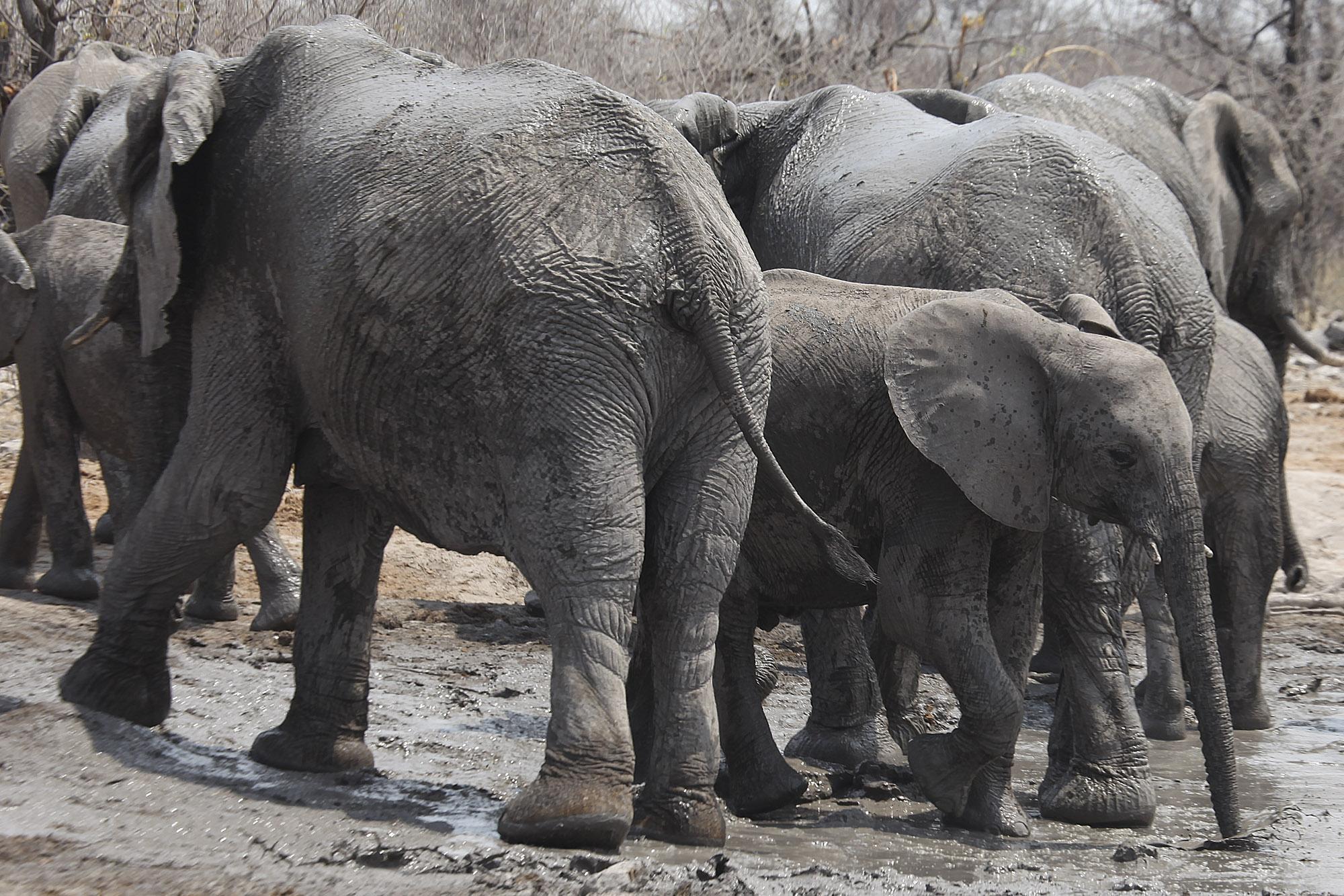 Elephants at Kalkheuwel waterhole