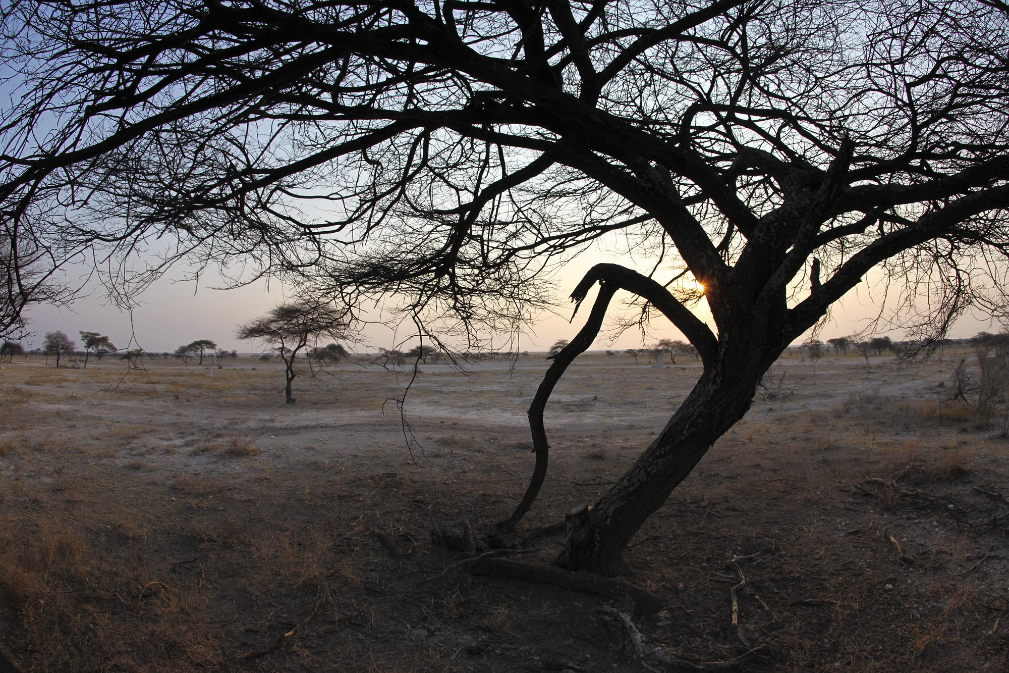 Looking out over Etosha from the deck