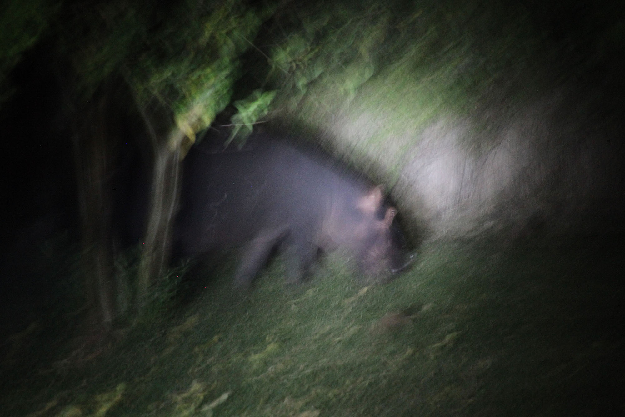 Hippo - [long exposure with the only lighting from a couple of flashlights]